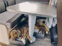 Sunlight-Hundebett inkl. Einlegekissen